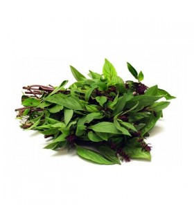 Fresh Grown Organic Herbs - Thai Basil