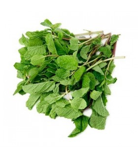 Fresh Grown Organic Herbs - Mint
