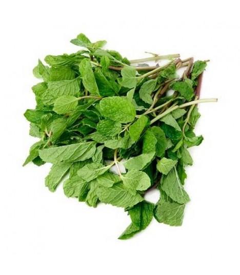 Fresh Grown Organic Herbs - Mint