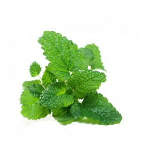 Fresh Grown Organic Herbs - Lemon Balm