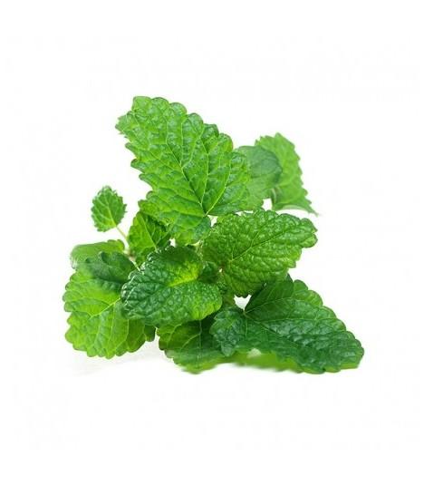Fresh Grown Organic Herbs - Lemon Balm