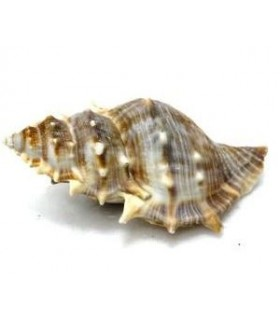 Zoo Med Hermit Crab Growth Shell 1pcs - Large