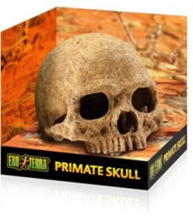 Exo Terra Human Skull Hiding Cave