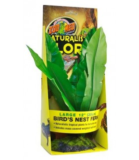 Zoo Med Naturalistic Flora - Bird's Nest Fern - Large 12""
