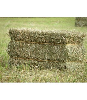 Unbranded USA Second Cut Timothy Hay Bale