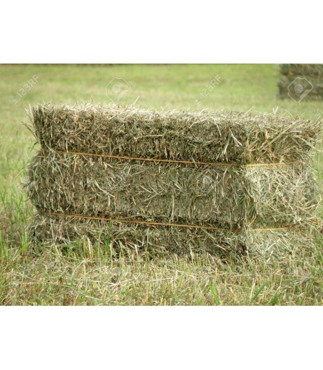 Unbranded USA Second Cut Timothy Hay Bale 55KG