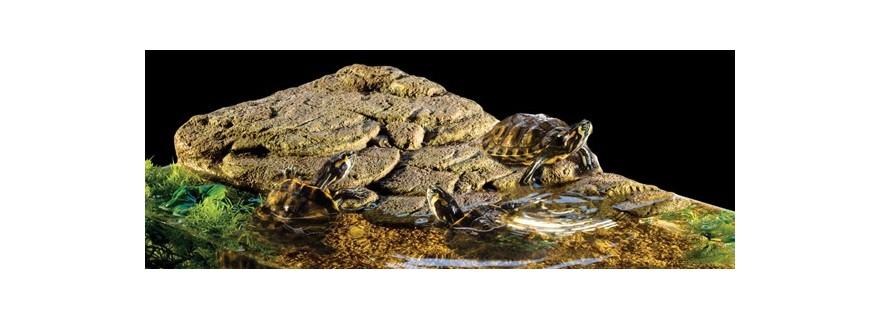 Aquatic Turtle / Land Tortoise
